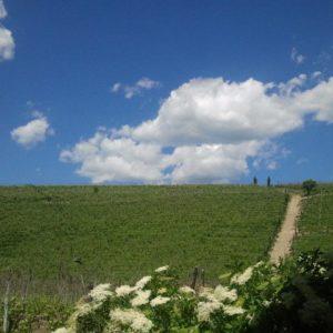 Agriturismo Gran Collina